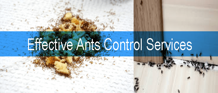 Effective Ants Control Services
